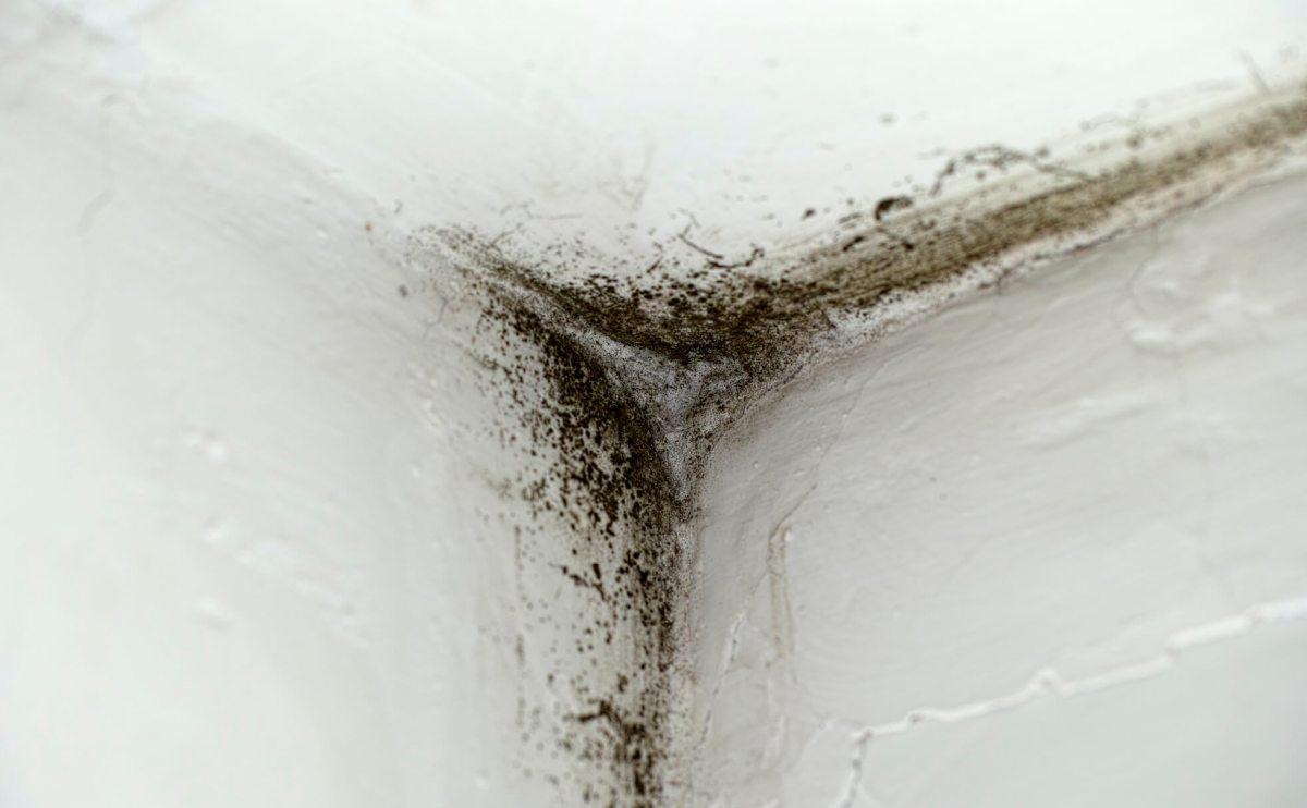 come-rimuovere-la-muffa-dalle-pareti
